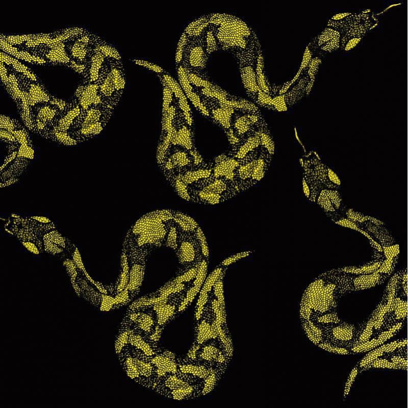 Tissu scuba noir imprimé serpent jaune