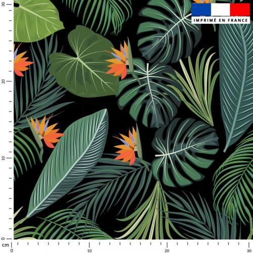 Jungle et oiseau du paradis - Fond noir