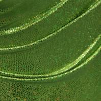 Lycra imitation serpent vert clair