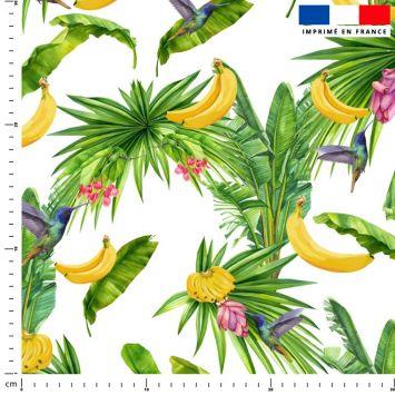 Banane et colibri - Fond blanc